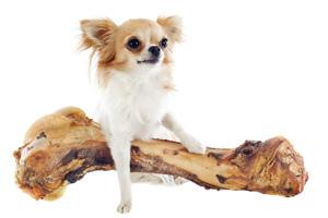 Hund mit Knochen 123rf