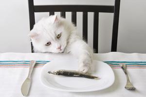 Katze am Tisch 123rf