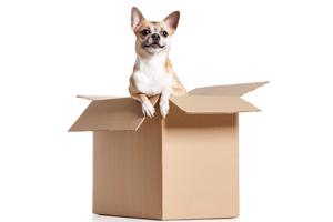 Hund aus Schachtel 123rf