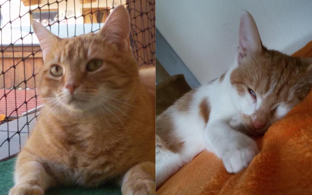 Katzen Boris und Pauli