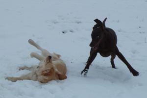 Hunde Cindy und Luna beim Spiel