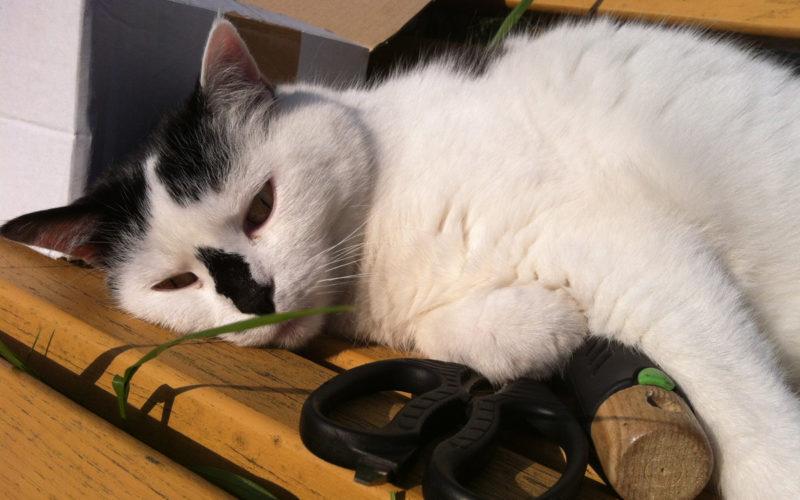 Katze Cosma liebt das Bio Katzenfutter von Defu