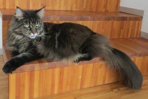 Katze Shania auf Treppe