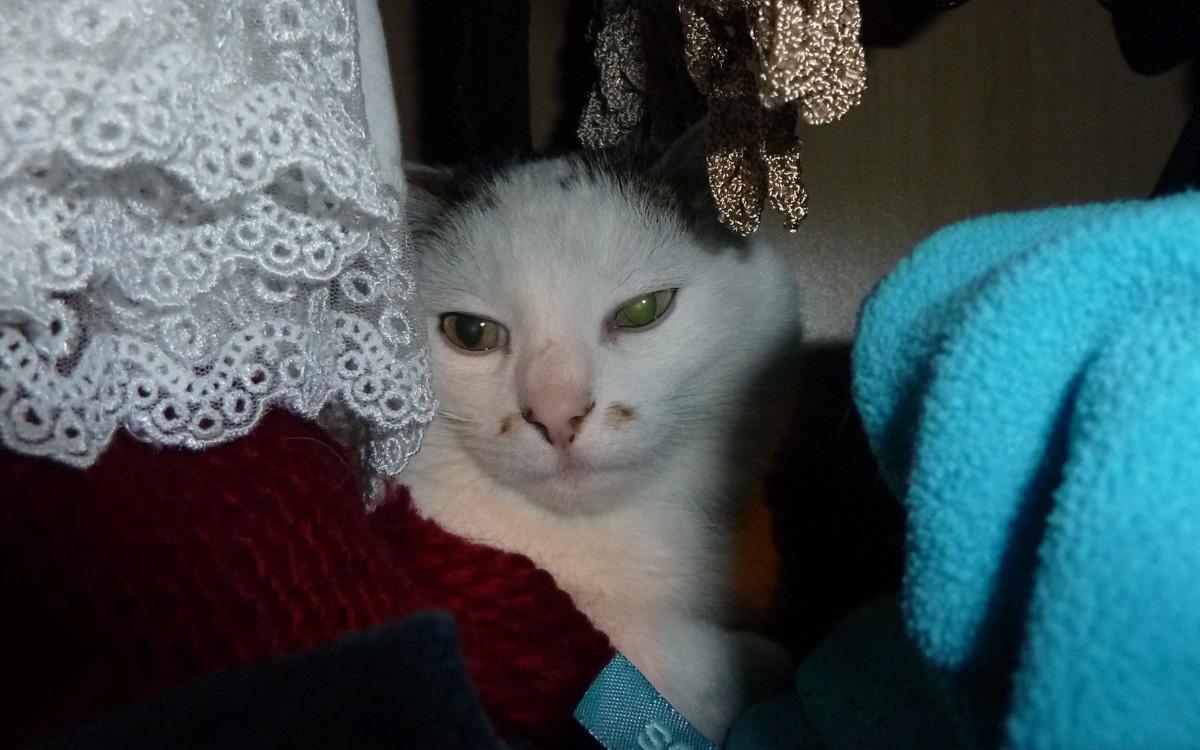 Kazte Shiva liebt das Bio Katzenfutter von Defu