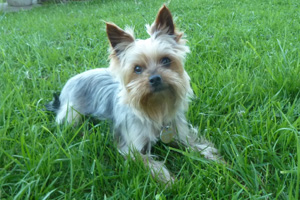 Hund Inka im Garten