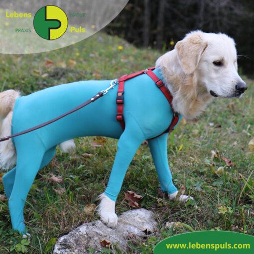 VetMedCare Tierbedarf Body mit 4 Beinen Hund Ruede 2