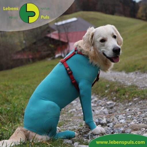 VetMedCare Tierbedarf Body mit 4 Beinen Hund Ruede 3