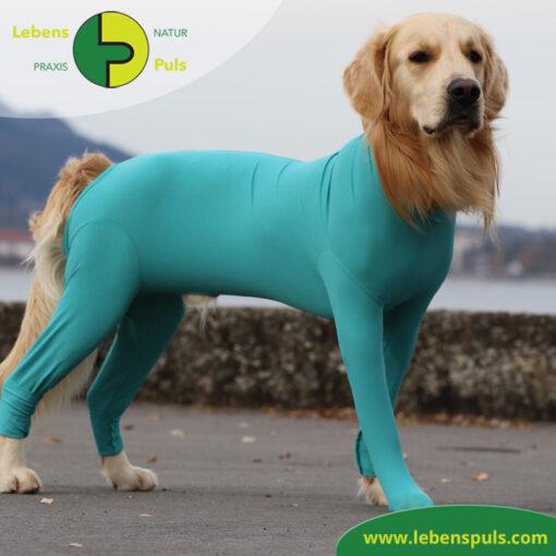 VetMedCare Tierbedarf Body mit 4 Beinen Hund Ruede 1