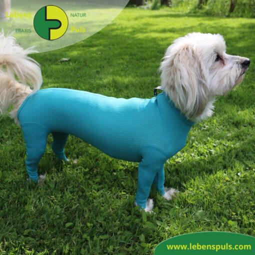 VetMedCare Tierbedarf Body mit 4 Beinen Hund Huendin 3