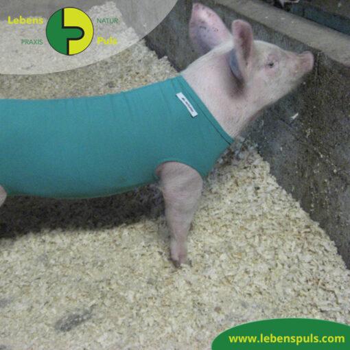 VetMedCare Tierbedarf Body Schwein