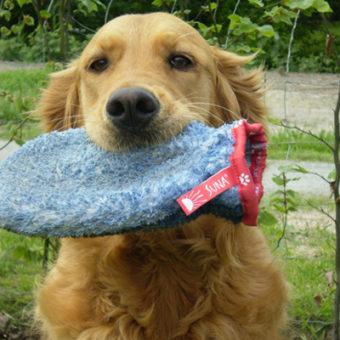 VetMedCare Tierbedarf Fellpflege Handschuh von Hund gezeigt