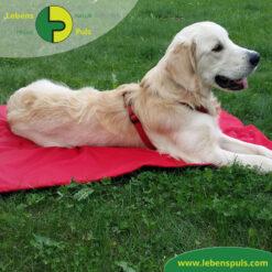 VetMedCare Tierbedarf Animal Pad