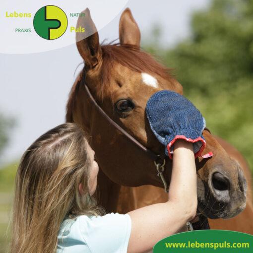 VetMedCare Tierbedarf Fellpflege Handschuh 2