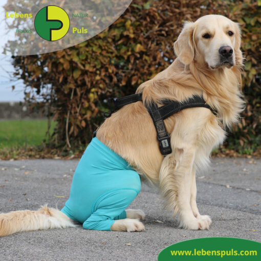 VetMedCare Tierbedarf Safety Pants Hund
