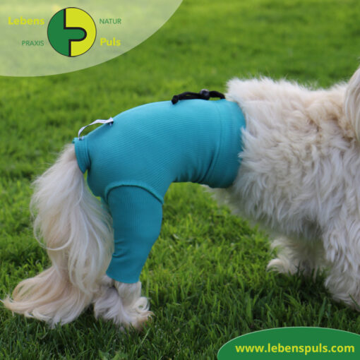 VetMedCare Tierbedarf Safety Pants Hund 3