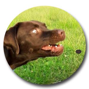 Hunde Leckerli Gesicht für LebensPuls