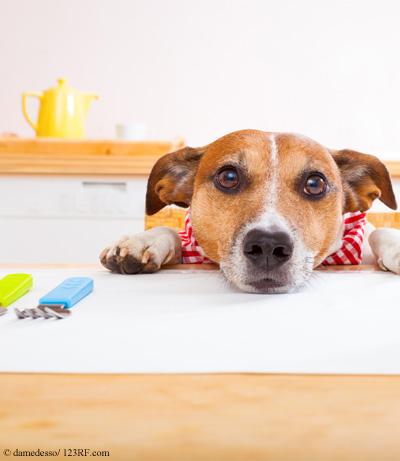 Buch Hund Ernaehrung Futtermedicus Beitrag LebensPuls