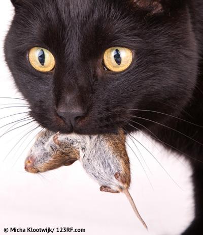 Buch Katze Ernaehrung Futtermedicus Beitrag LebensPuls