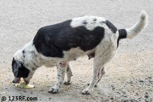 Hund Erbrechen Durchfall Hund Katze Beitrag LebensPuls