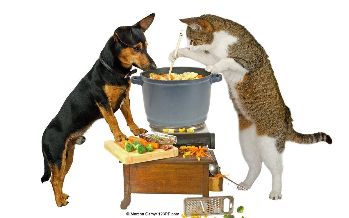 Fuetterung Kochen Hund Katze Beitrag LebensPuls