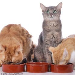 Katzen Futterabo