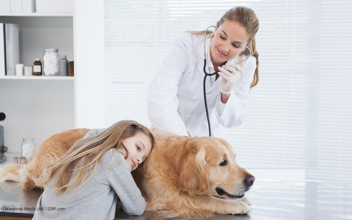 Hund beim Tierarzt Beitrag LebensPuls