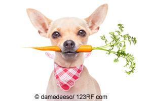 Hund mit Karotte Beitrag LebensPuls
