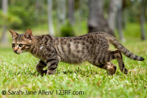 Katze zu mager Beitrag LebensPuls