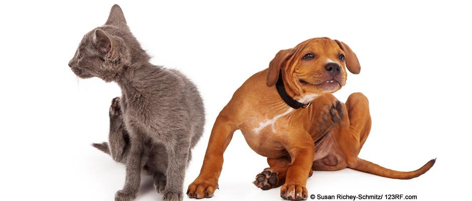 Tierernährung Futtermittelunverträglichkeit Hund Katze Beitrag LebensPuls