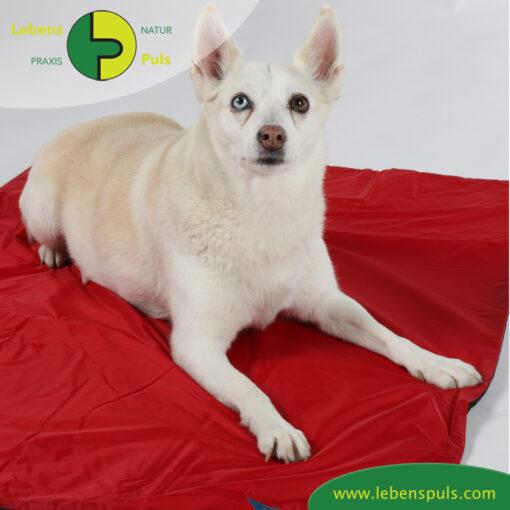 VetMedCare Tierbedarf Hundedecke Animal Pad3