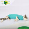 VetMedCare Tierbedarf Cat Body greenblue Bauch2