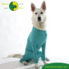 VetMedCare Tierbedarf Dog and Cat Body mit 4 Beinen Huendin greenblue sitz
