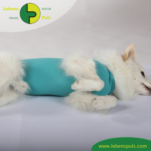 VetMedCare Tierbedarf Dog and Cat Body Ruede greenblue Bauch