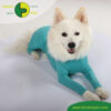 VetMedCare Tierbedarf Dog and Cat Body mit 4 Beinen Ruede greenblue platz