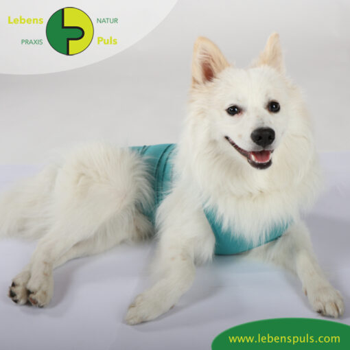 VetMedCare Tierbedarf Dog and Cat Body Ruede greenblue platz
