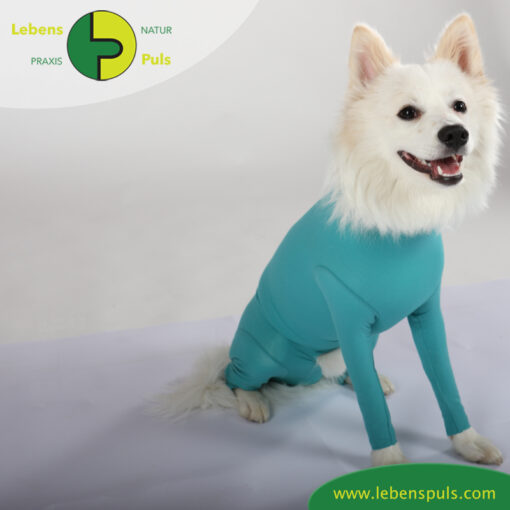 VetMedCare Tierbedarf Dog and Cat Body mit 4 Beinen Ruede greenblue sitz2