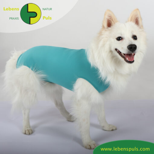 VetMedCare Tierbedarf Dog and Cat Body Ruede greenblue steh