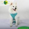 VetMedCare Tierbedarf Dog and Cat Body Ruede greenblue vorne