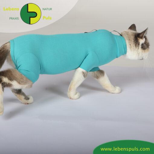 VetMedCare Tierbedarf Cat Body greenblue seitlich