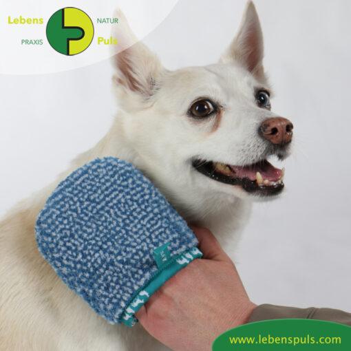VetMedCare Tierbedarf Hund Katze Pferd Fellpflegehandschuh klein
