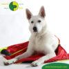 VetMedCare Tierbedarf Hundedecke Safety Bag