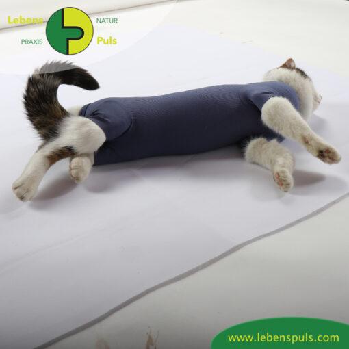 VetMedCare Tierbedarf Cat Body Bauch indigoblue