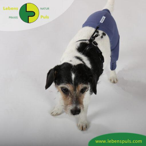 VetMedCare Tierbedarf Safety Pants indigoblue oben
