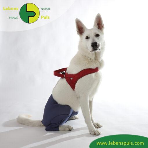 VetMedCare Tierbedarf Safety Pants indigoblue sitz
