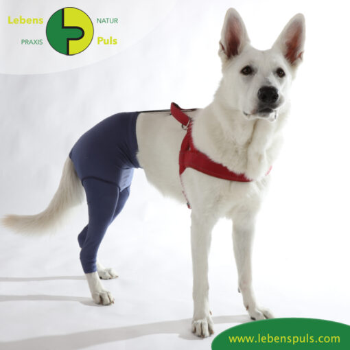 VetMedCare Tierbedarf Safety Pants indigoblue steh