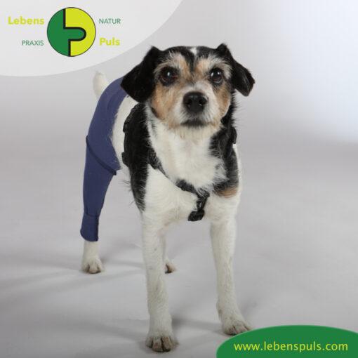 VetMedCare Tierbedarf Safety Pants indigoblue vorne