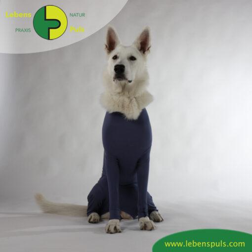 VetMedCare Tierbedarf Dog and Cat Body mit 4 Beinen Huendin indigoblue sitz2